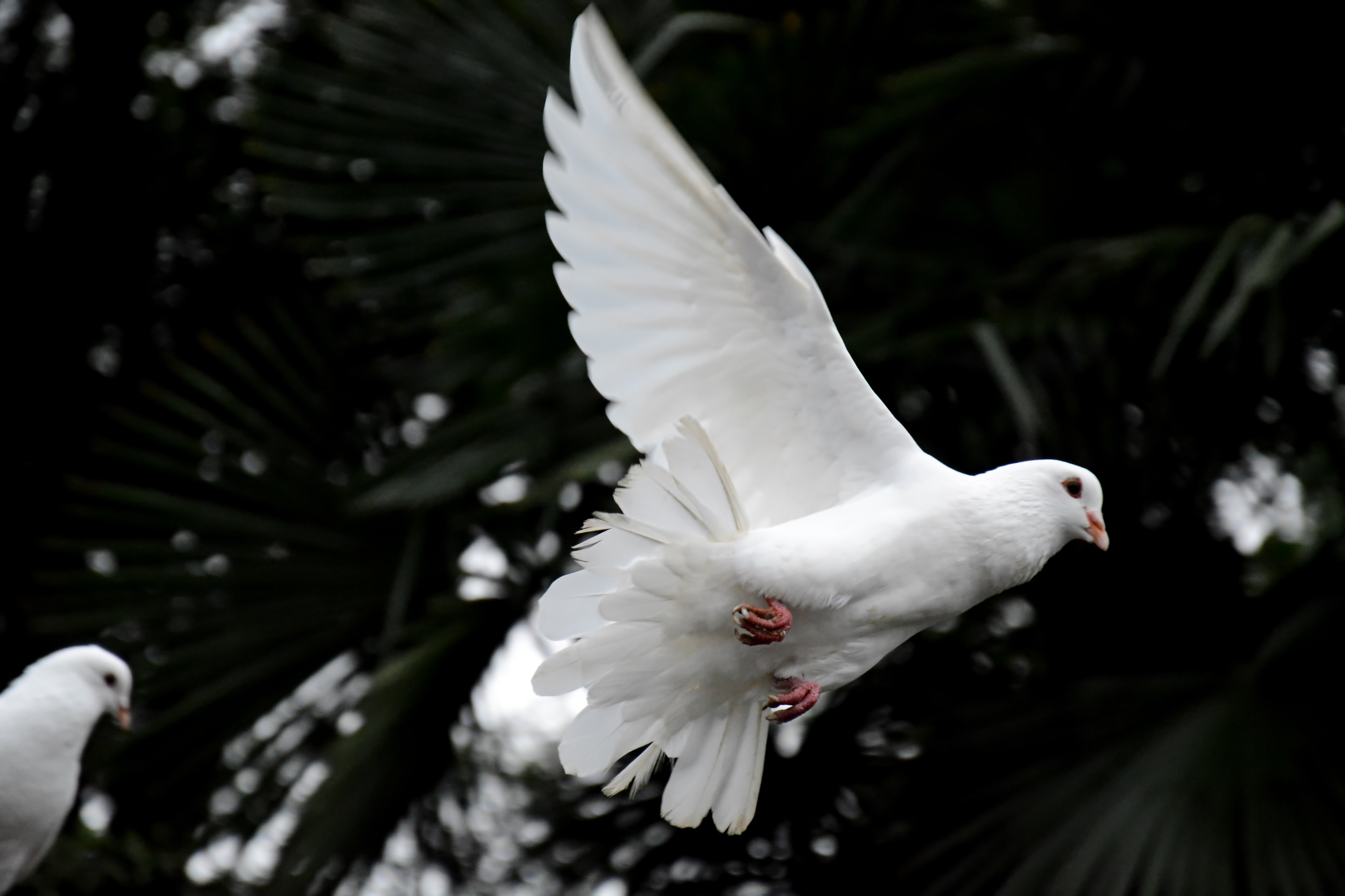 An Introduction To The Holy Spirit